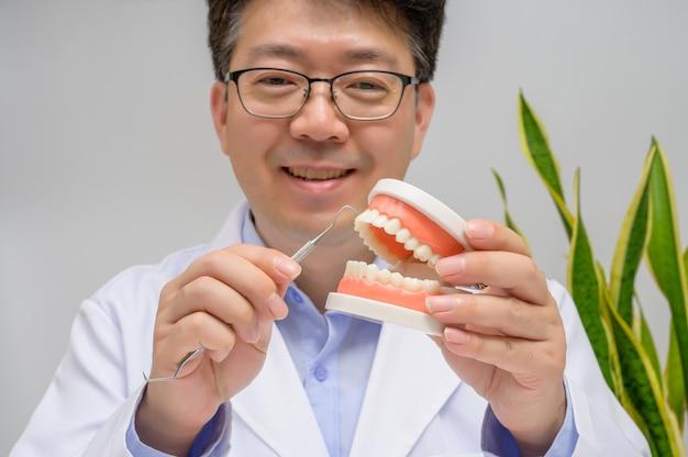 歯の模型と歯科用器具を手にした中年のアジア人歯科医。