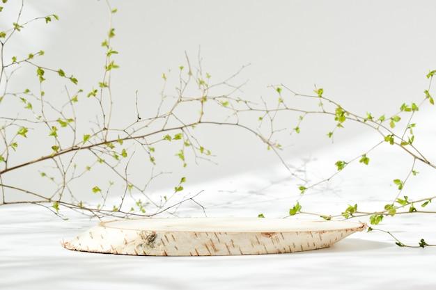 자연 그림자가있는 자연 표면에 나뭇잎과 함께 누워 쓰러진 자작 나무 나무의 최소한의 장면