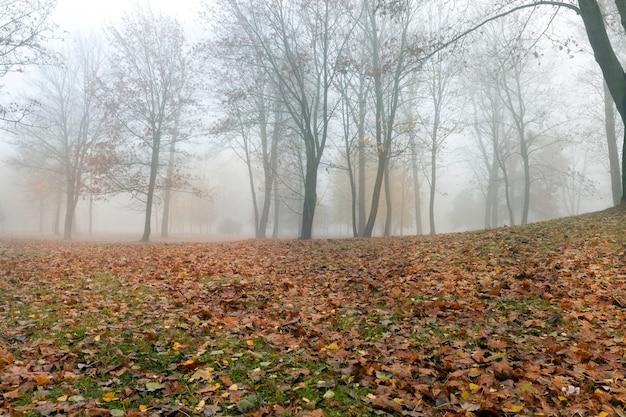秋の公園の霧のかかった朝、葉のない落葉樹と緑の草の上に横たわる落ち葉