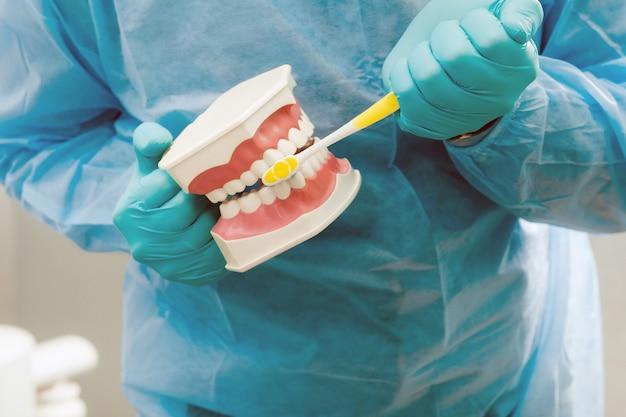 Модель челюсти человека с зубами и зубной щеткой в руке стоматолога.