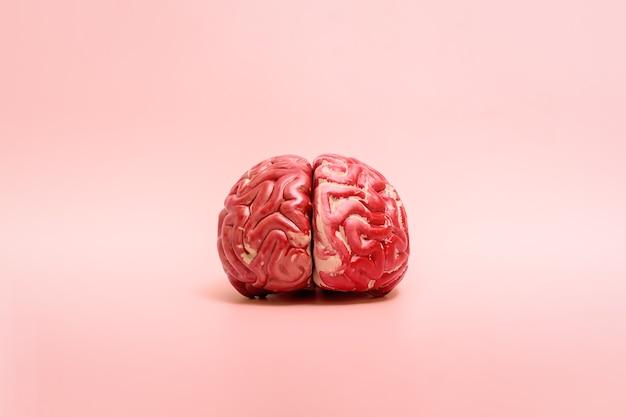 복사 공간이 있는 분홍색 배경에 있는 인간 두뇌의 모델입니다.