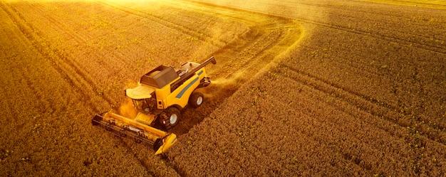 Новый современный комбайн убирает зерно. солнечные лучи освещают пылевое облако. прекрасный летний пейзаж. выращивание еды.