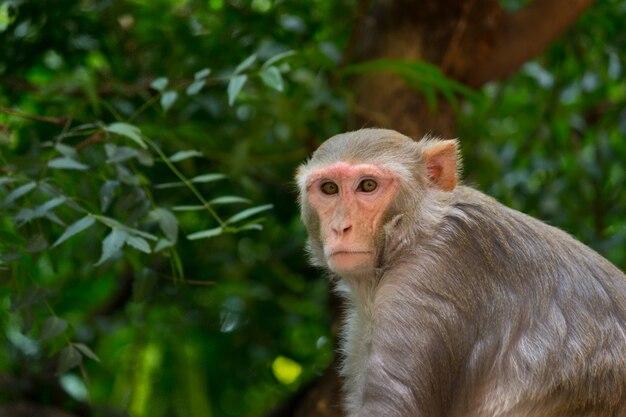 자연 서식지에서 나무에 앉아있는 원숭이