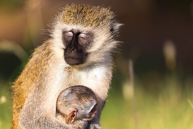 母猿が赤ちゃんを抱いて座っている
