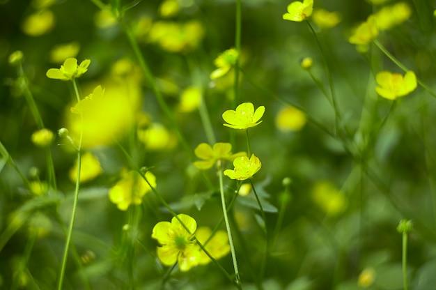 공원에 노란색 꽃의 무리입니다. 그래픽 디자인을 위한 배경이나 질감으로 좋습니다.