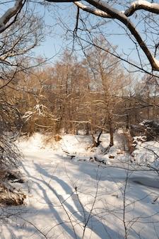 Узкая речка в лесу зимой, река покрыта толстым льдом от замерзшей воды, зимней природы и мороза