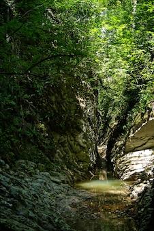 日光が葉を突き破る熱帯林の小川の狭い日陰の石の峡谷