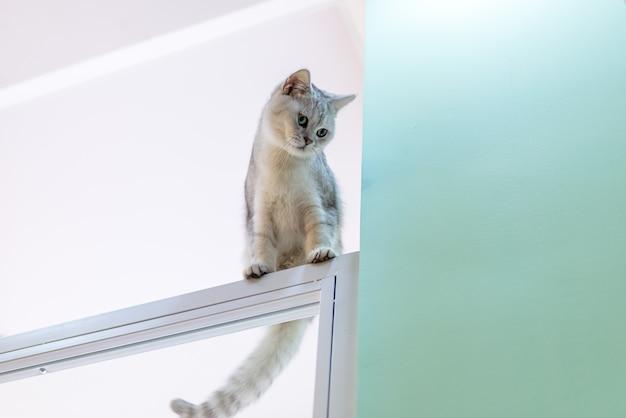 높이 오르는 장난꾸러기 고양이