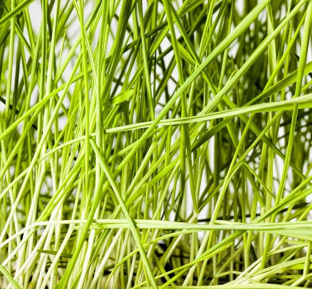 草の新しい作物