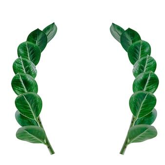 緑の葉の素敵なデザインは、白い背景を持つハートの緑の葉のような形をしています