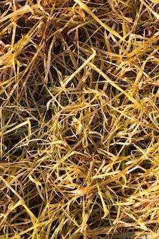 秋に死んだ枯れた黄ばんだ小麦の対照的ではない