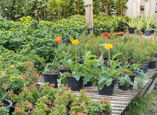 꽃밭에 꽃을 심기 위한 묘목장.