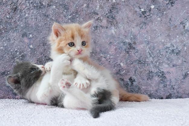 На центральном фоне играет пара пушистых цветных котят.