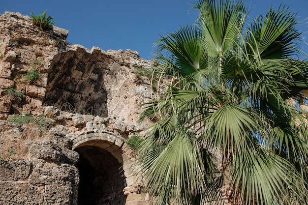 何世紀にもわたって破壊された古い古代ギリシャの建物を背景にしたヤシの木