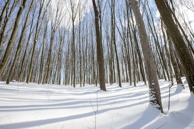눈과 태양이 있는 파노라마 겨울 숲