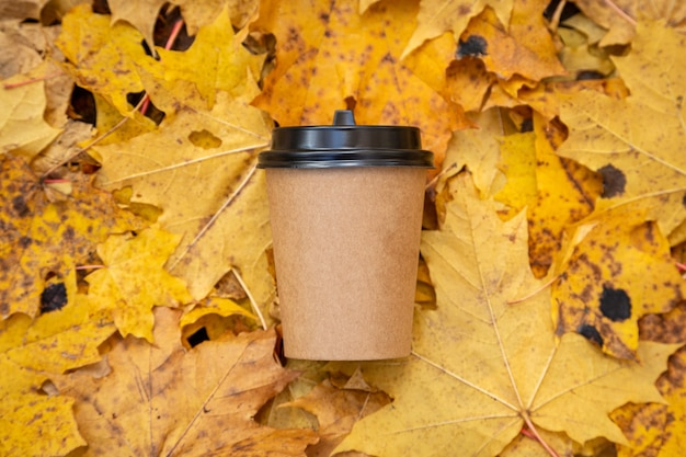 노랗게 물든 단풍잎 사이에 있는 종이컵의 커피