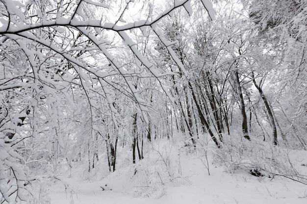 Парк с разными деревьями в зимний сезон