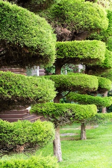 관목과 푸른 잔디, 조경, 기하학적 형태의 나무 절단이 있는 공원.