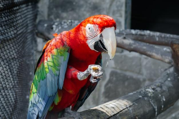 Попугай сидит на жердочке крупным планом.