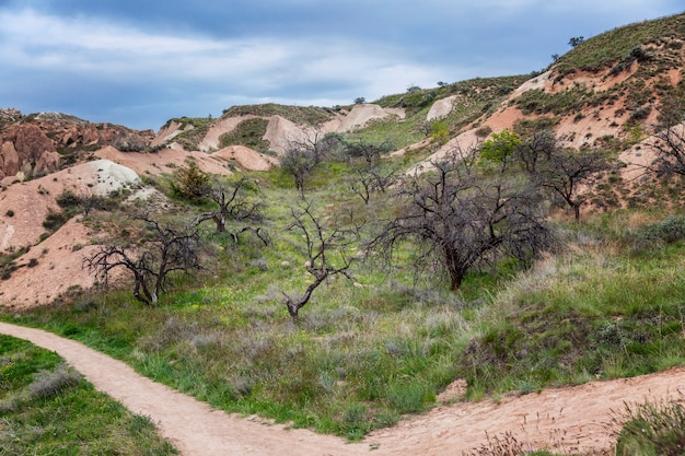 Тропинка среди розовых скал и зелени каппадокийских деревьев. туризм и путешествия. красивый пейзаж.