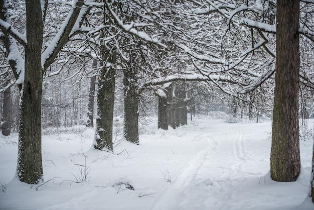 雪に覆われた木々の間の小道。
