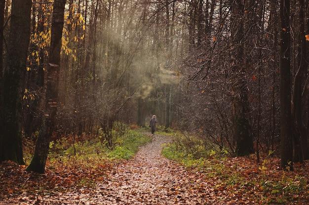 落ち葉に覆われた小道が霧のかかった霞のある秋の森へと遠くへと入り、少女がそれに沿って歩きます。