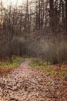 落ち葉で覆われた小道は、霧のかかった霞がかかった秋の森へと遠くへと入ります。