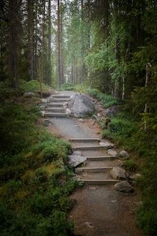 Путь в сказочном лесу в сумерках. таинственный свет и дымка вдалеке
