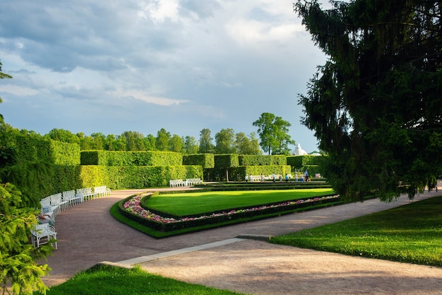 깔끔하게 손질된 덤불이 있는 녹색 여름 공원 지역의 길