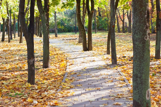 落ち葉が散りばめられた秋の都市公園の小道。