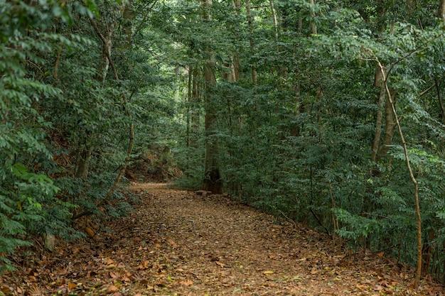 Путь в густых джунглях. природный заповедник. солнце не пробивается сквозь деревья.
