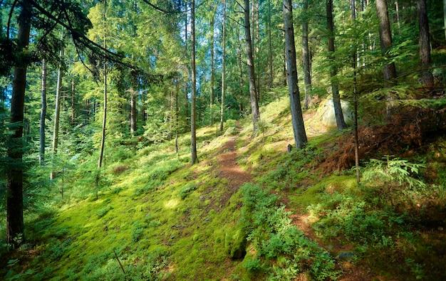 木々の間から山へと続く森の小道