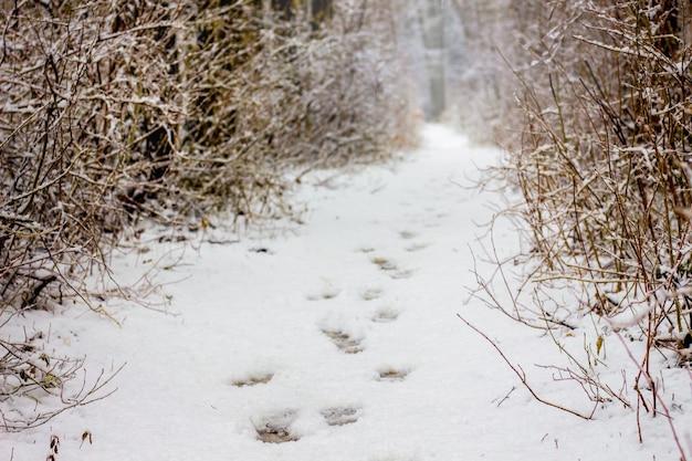 冬の森の小道、人の足跡が見える、冬の森の散歩