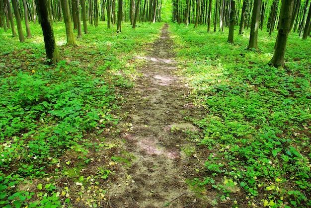 Путь в зеленом лесу