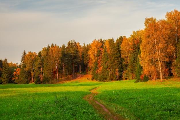 畑を抜けて秋の森へと続く小道。パブロフスク。ロシア。