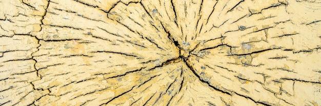 Узор из трещин на срезе сухого желтого бревна дерева