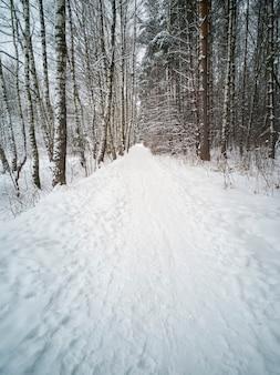 日中の冬の森の舗装されたトレイル。トレイルの周りの木々。縦の写真
