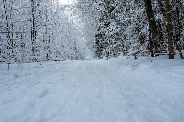 日中の冬の森の舗装されたトレイル。トレイル周辺の木々