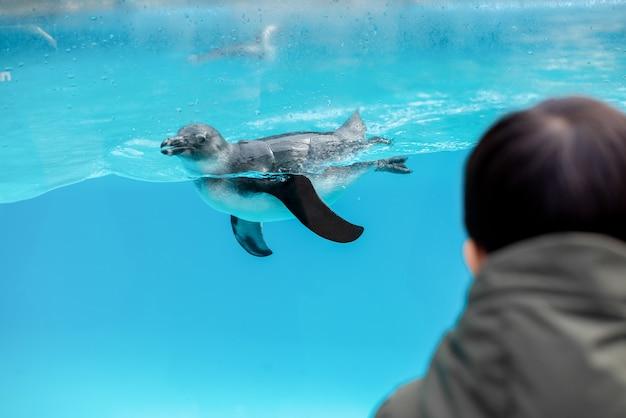 수족관에서 수영하는 펭귄