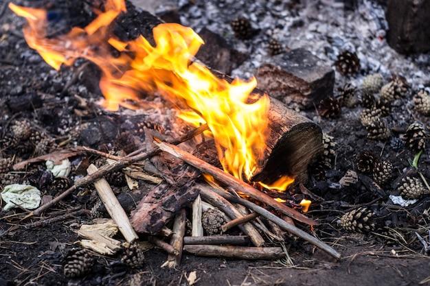 Человек разводит костер на открытом воздухе в лесу для приготовления пищи и безопасности. Premium Фотографии