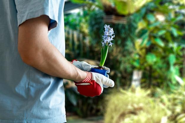 Человек, держащий небольшой росток растения в горшке, забота о молодой жизни