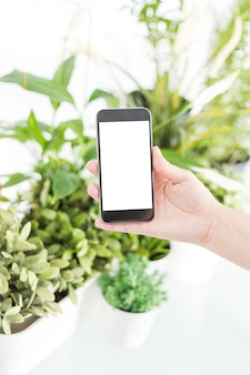 A person's hand holding mobile phone near potted plants