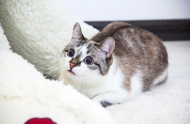 Домашний кот прячется в приюте. любопытный кот.