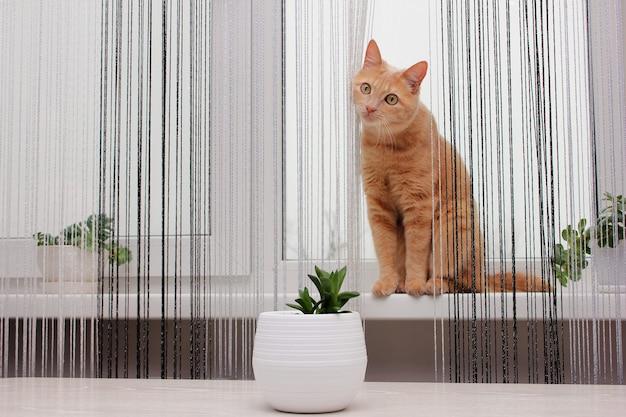 애완 동물. 빨간 고양이는 집 식물 옆 창턱에 앉아 있습니다. 실 커튼. 집안의 알레르겐.