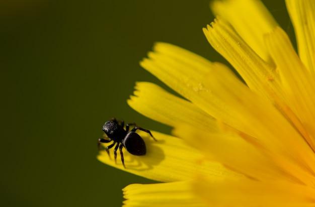 夏の黄色い花に蜘蛛の写真