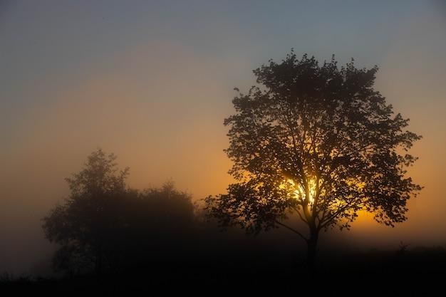 Живописный осенний пейзаж, одинокое дерево на фоне туманной зари, на берегу реки.