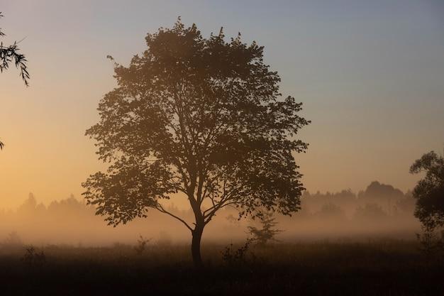 그림 같은 가을 풍경, 안개 낀 새벽을 배경으로 외로운 나무가 강둑에 있습니다.