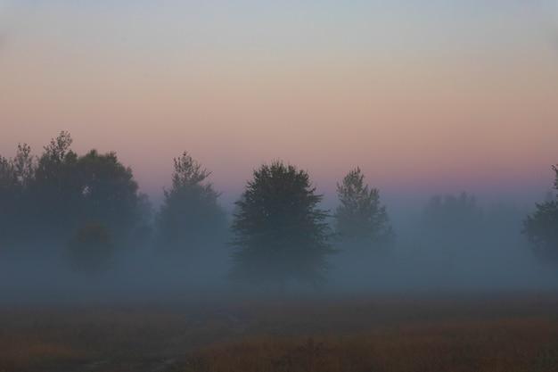 Живописный осенний пейзаж, деревья на фоне туманного рассвета, на поляне у берега реки.