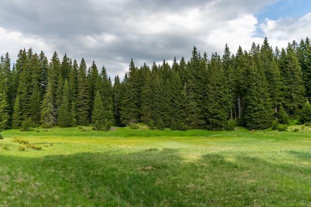 高くて大きな山々に囲まれた森の中の絵のように穏やかな牧草地。モンテネゴ、キュアヴァック。パークドゥルミトル。