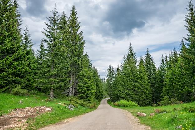 Через лес проходит живописная извилистая дорога
